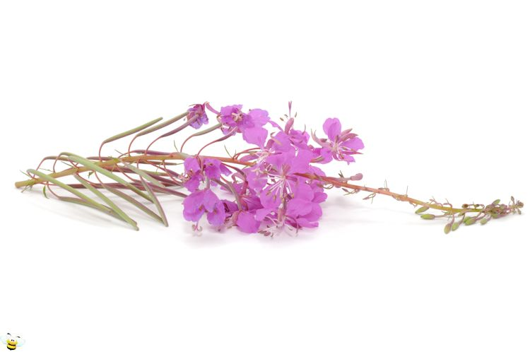 Fireweed Honey Flower