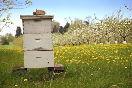 Honey Plants