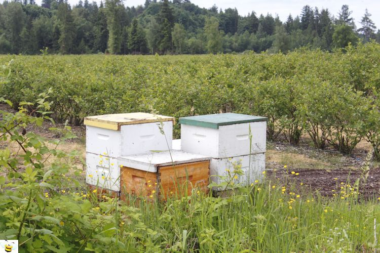 Blueberry Patch Bee Hive