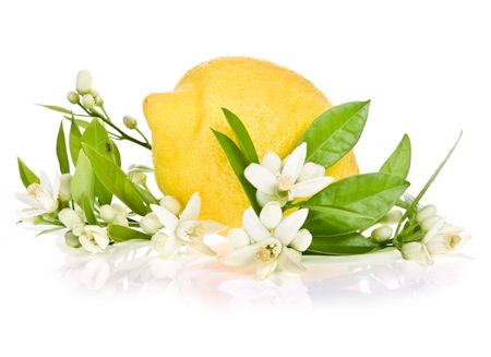 Lemon And Blossoms
